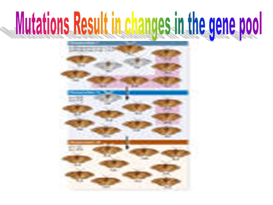 Mutations Result in changes in the gene pool