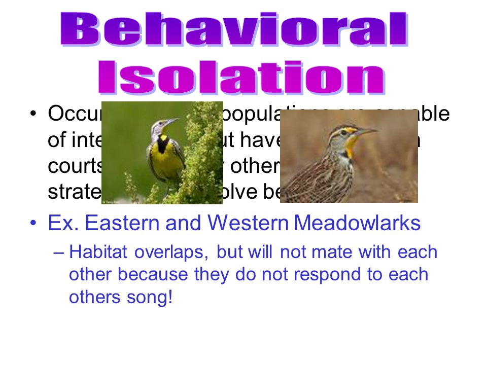 Behavioral Isolation.