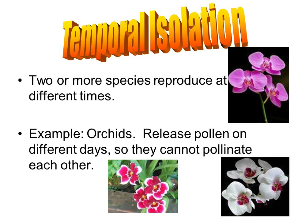 Temporal Isolation Two or more species reproduce at different times.