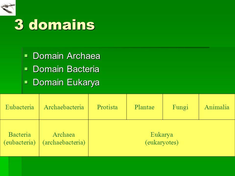 3 domains Domain Archaea Domain Bacteria Domain Eukarya Eubacteria