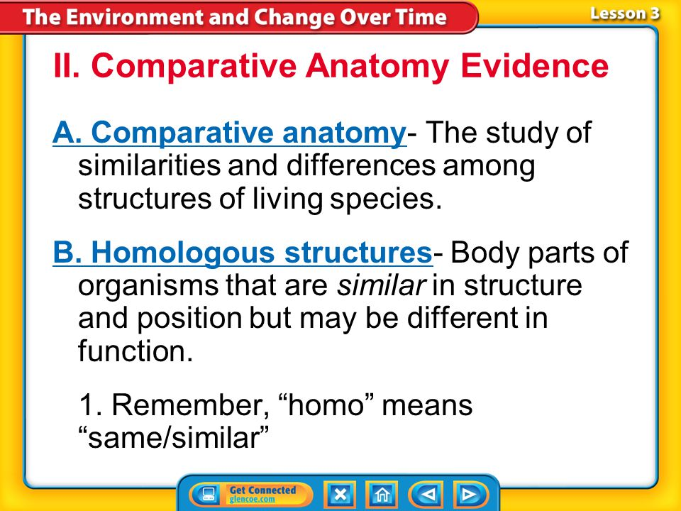 II. Comparative Anatomy Evidence
