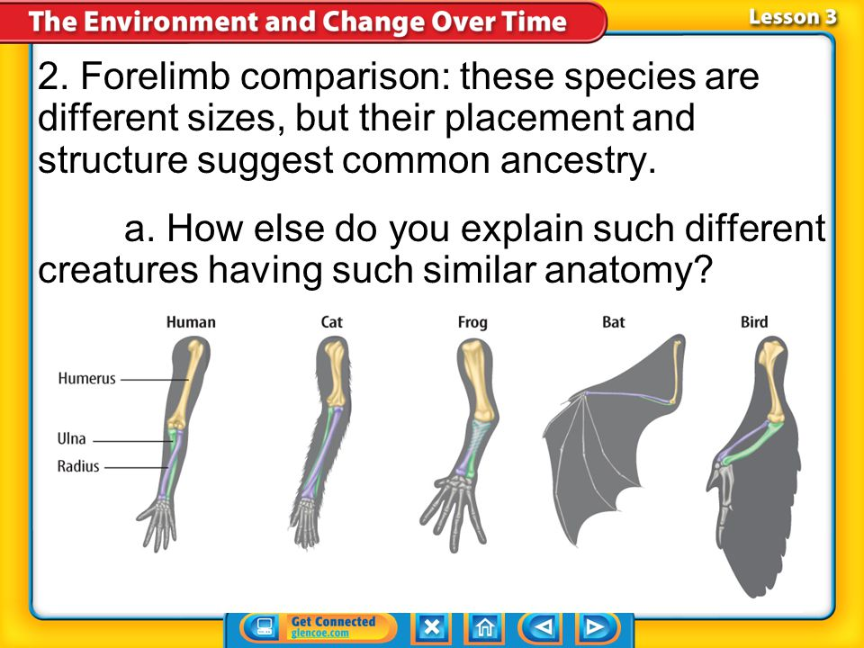 2. Forelimb comparison: these species are different sizes, but their placement and structure suggest common ancestry.