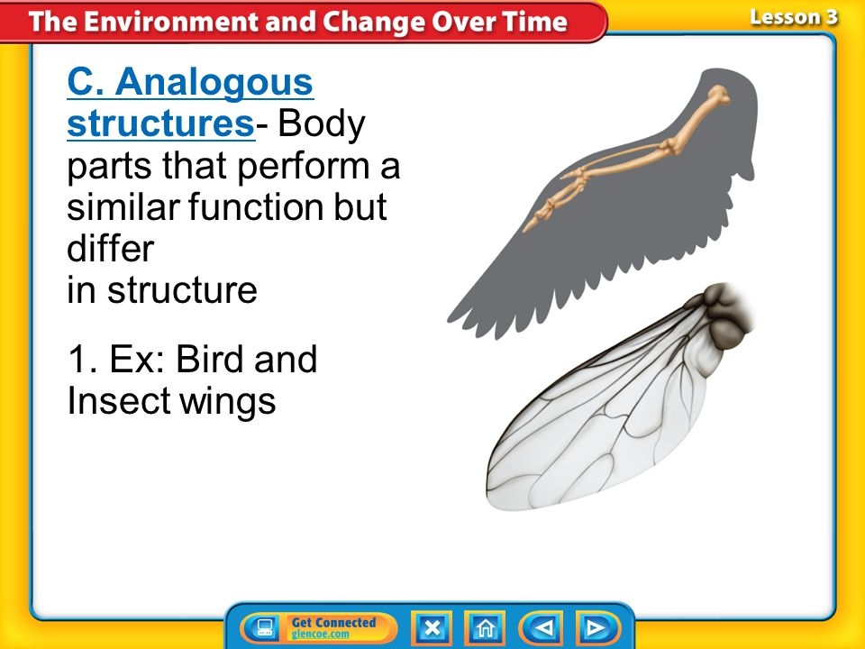 1. Ex: Bird and Insect wings