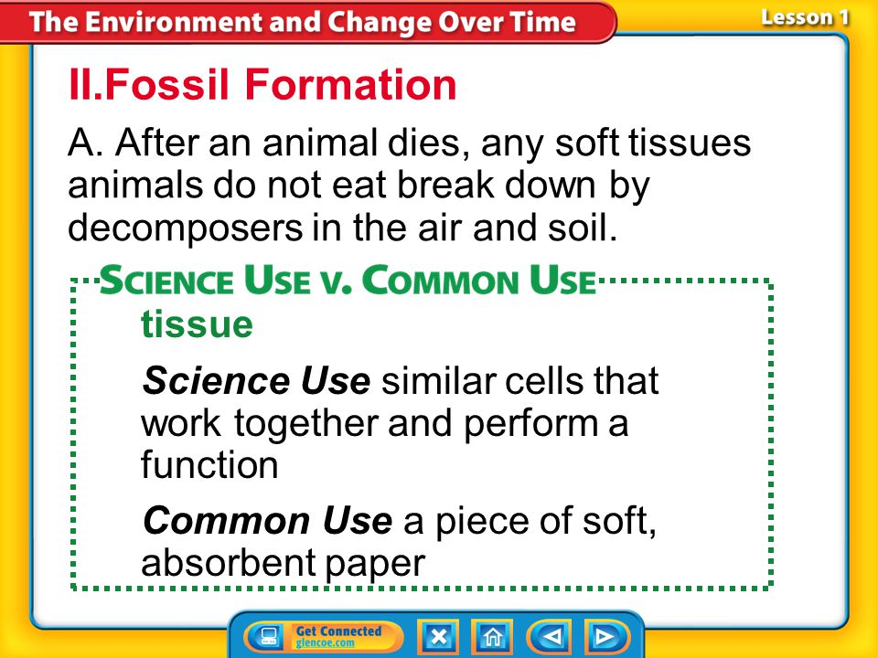 II.Fossil Formation A. After an animal dies, any soft tissues animals do not eat break down by decomposers in the air and soil.