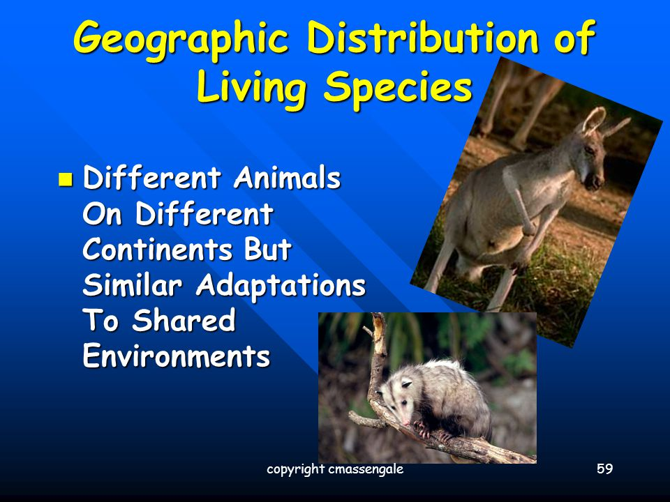 Geographic Distribution of Living Species