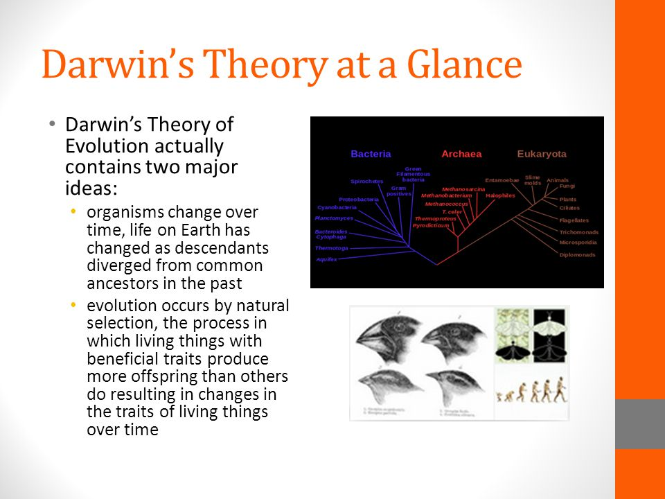 Darwin's Theory at a Glance