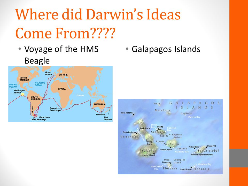 Where did Darwin's Ideas Come From