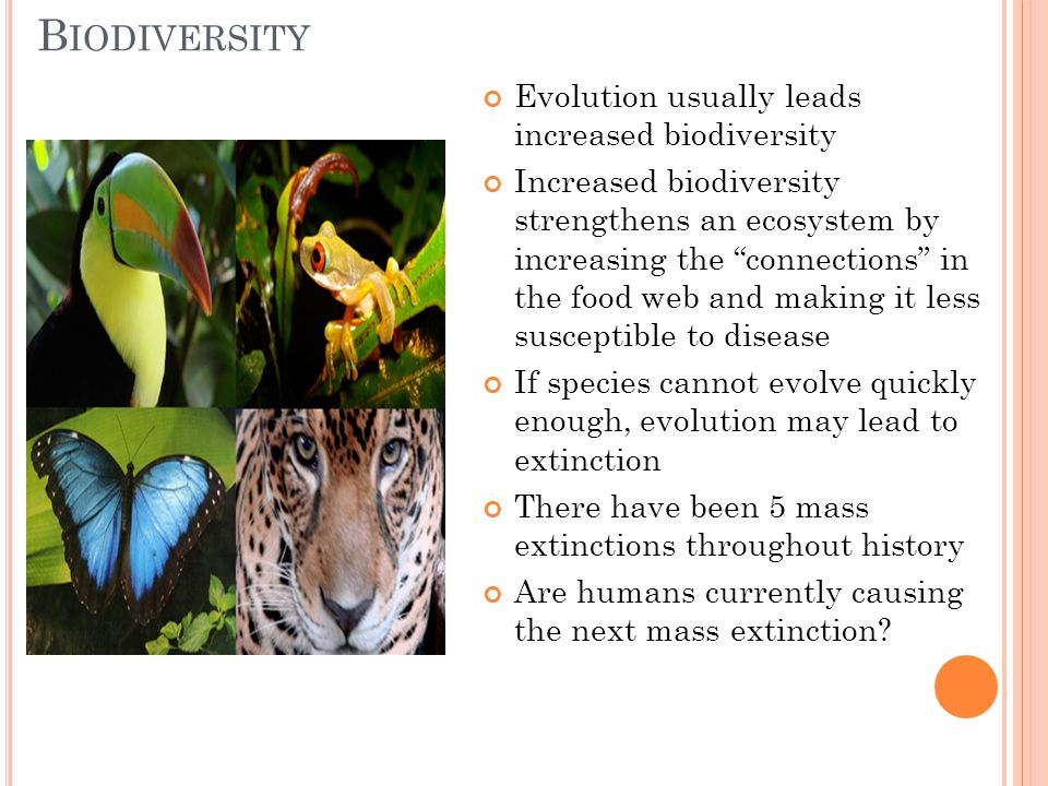 Biodiversity Evolution usually leads increased biodiversity