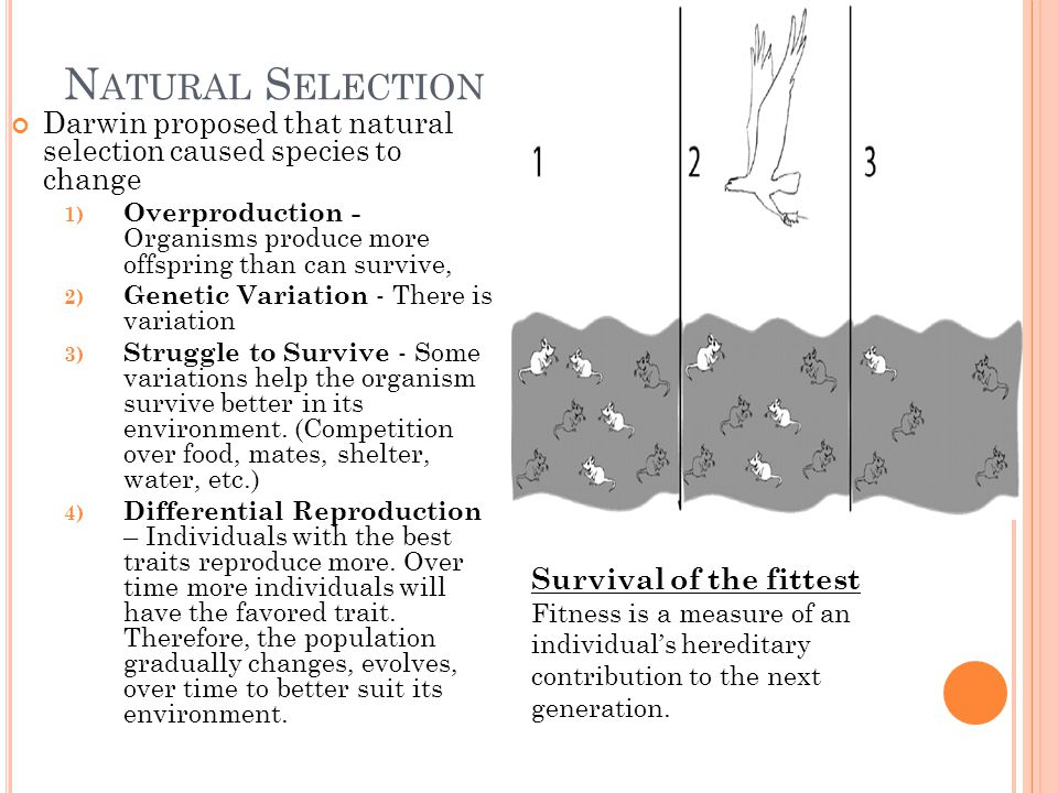 Natural Selection Darwin proposed that natural selection caused species to change.