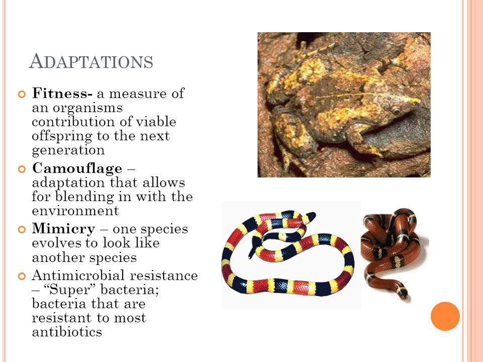 Adaptations Fitness- a measure of an organisms contribution of viable offspring to the next generation.
