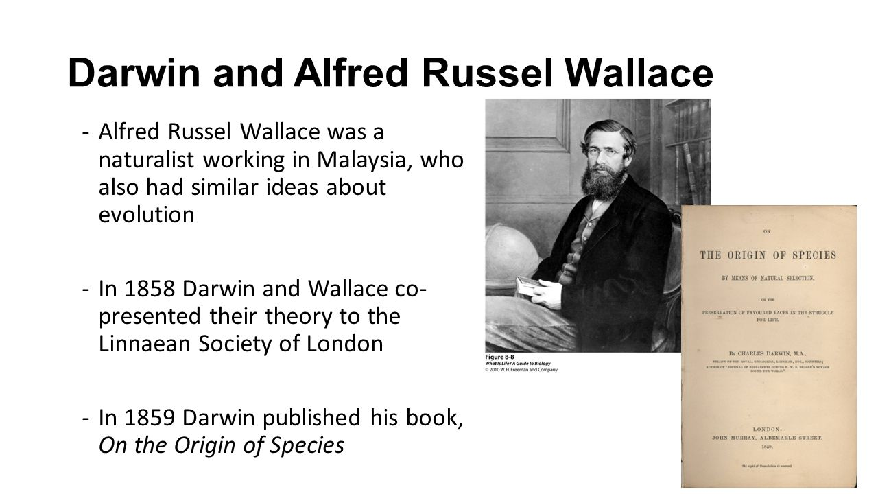 an analysis of the theories of darwin and wallace Charles darwin is often credited with discovering evolution through natural selection, but the idea was not his alone the naturalist alfred russel wallace, working independently, saw the same process at work in the natural world and elaborated much the same theory their important scientific .