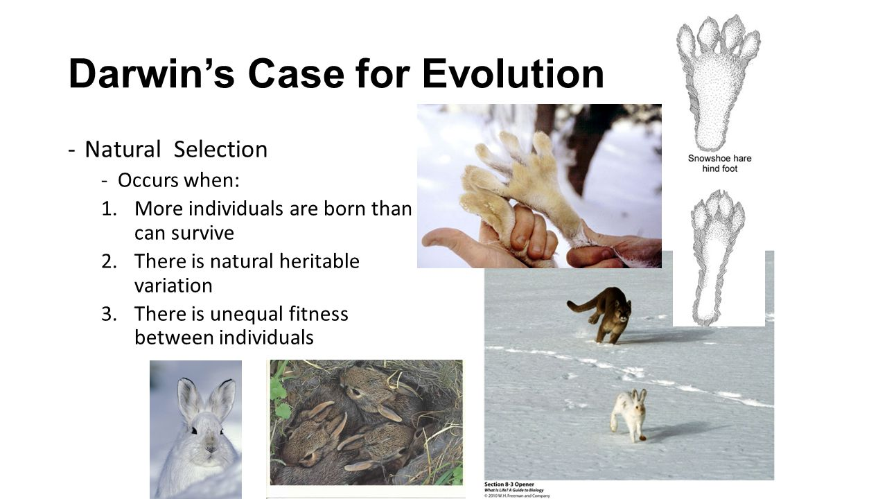Darwin's Case for Evolution