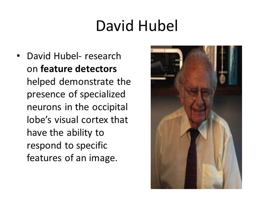 David Hubel