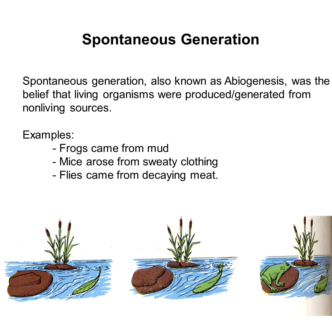 The Slow Death of Spontaneous Generation (1668-1859)