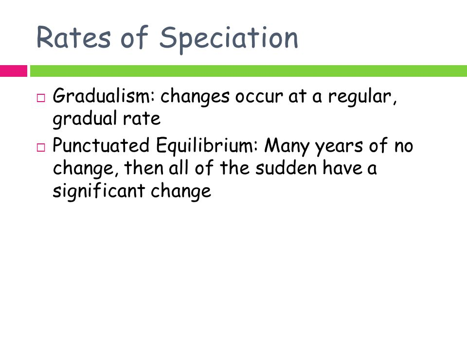 Rates of Speciation Gradualism: changes occur at a regular, gradual rate.