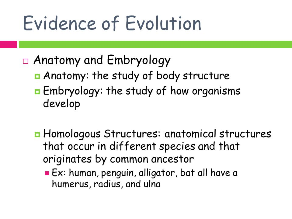 Evidence of Evolution Anatomy and Embryology