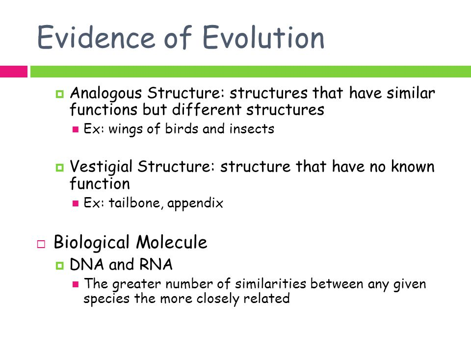 Evidence of Evolution Biological Molecule