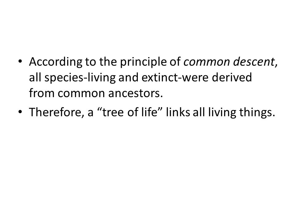 According to the principle of common descent, all species-living and extinct-were derived from common ancestors.