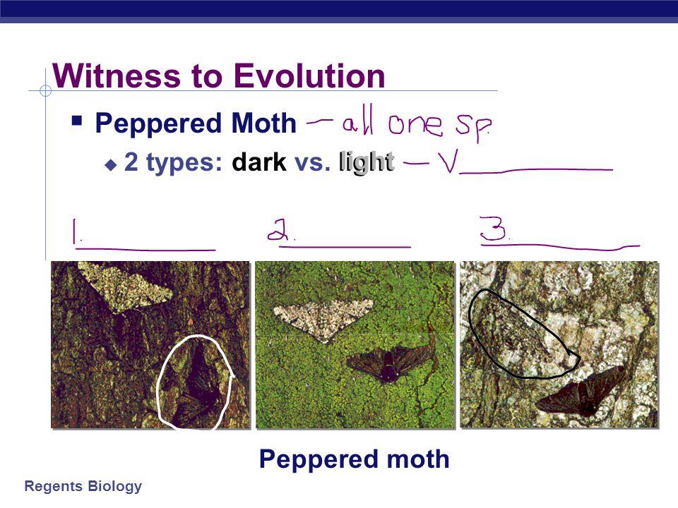 Witness to Evolution Peppered Moth 2 types: dark vs. light light