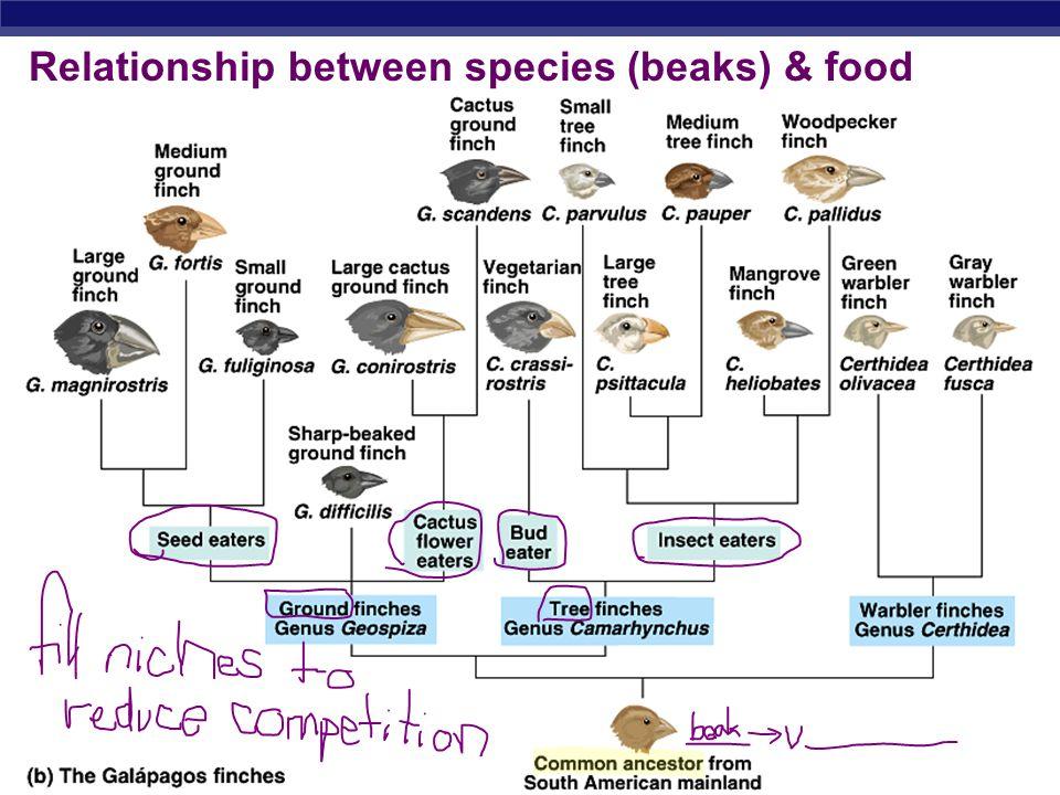 Relationship between species (beaks) & food