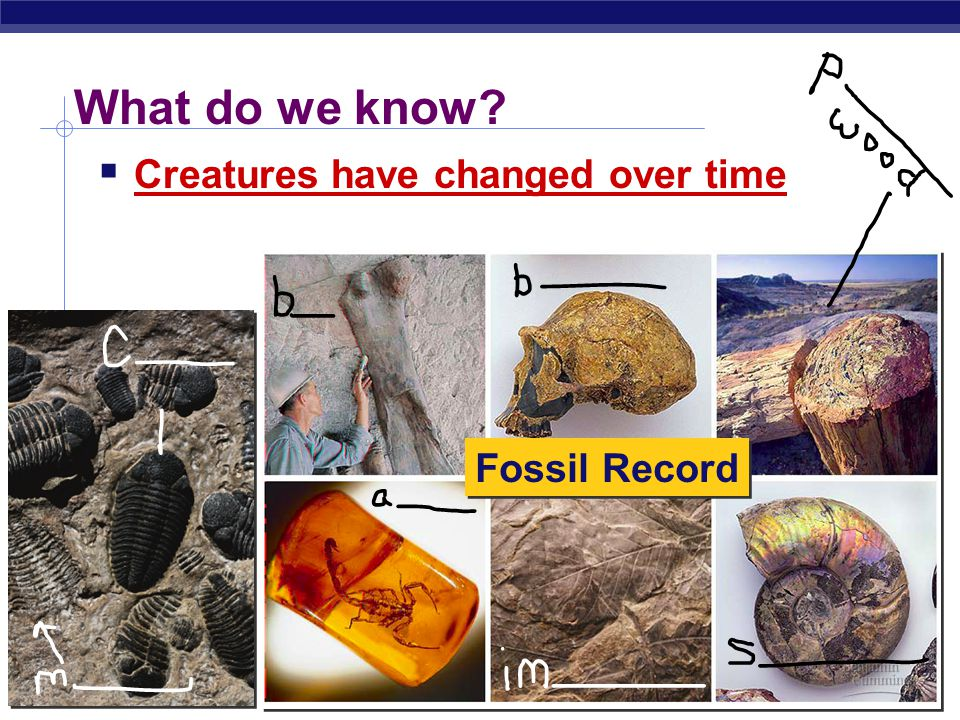 What do we know Creatures have changed over time Fossil Record