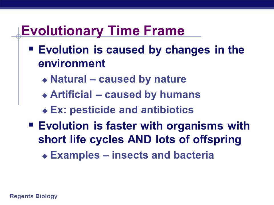 Evolutionary Time Frame