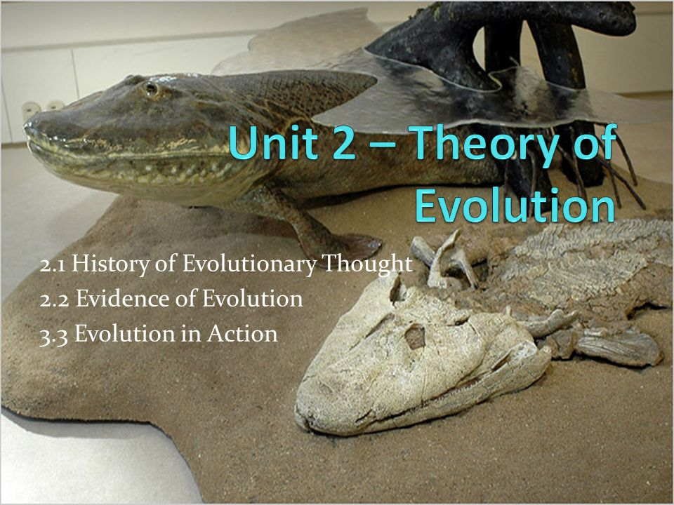 Unit 2 – Theory of Evolution
