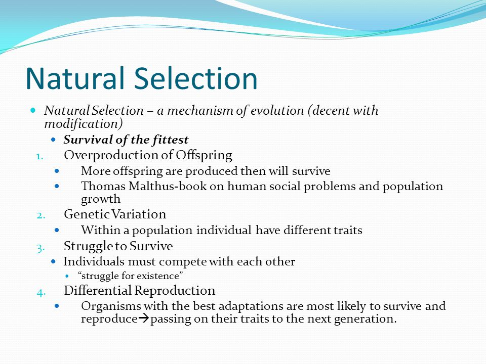 Natural Selection Natural Selection – a mechanism of evolution (decent with modification) Survival of the fittest.