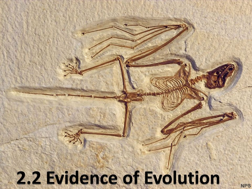2.2 Evidence of Evolution
