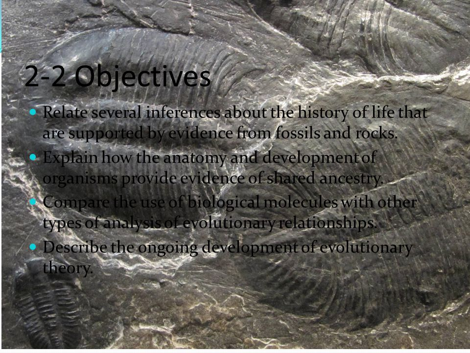 2-2 Objectives Relate several inferences about the history of life that are supported by evidence from fossils and rocks.