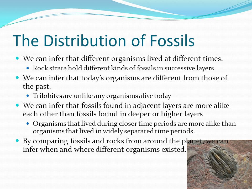The Distribution of Fossils