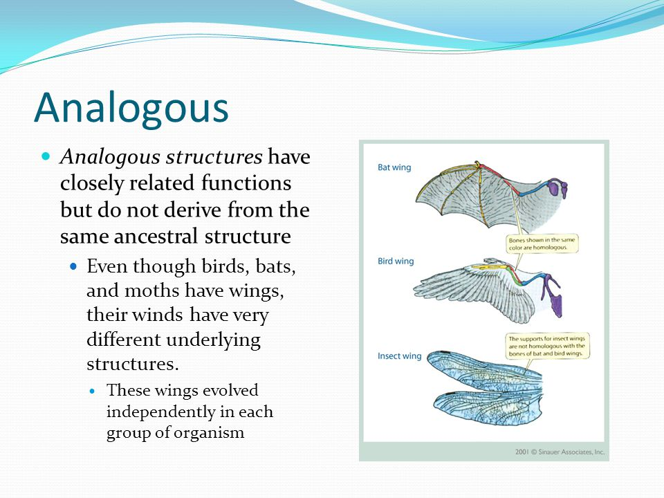 Analogous Analogous structures have closely related functions but do not derive from the same ancestral structure.