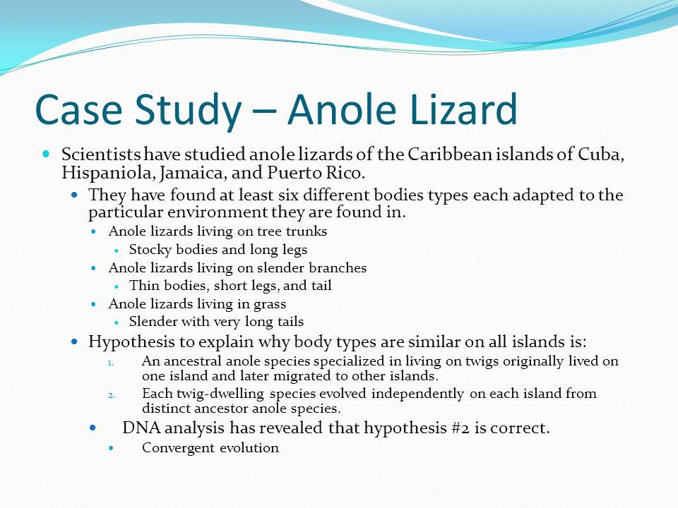 Case Study – Anole Lizard