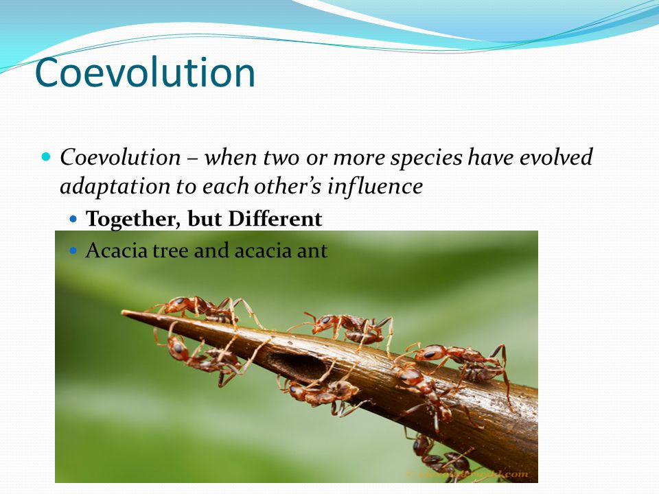Coevolution Coevolution – when two or more species have evolved adaptation to each other's influence.