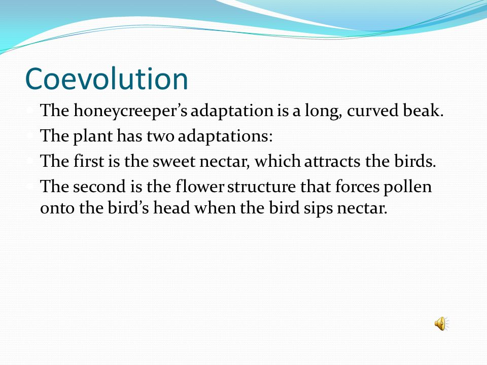 Coevolution The honeycreeper's adaptation is a long, curved beak.