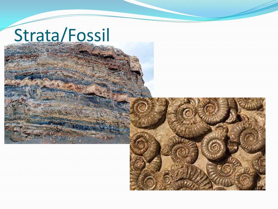 Strata/Fossil