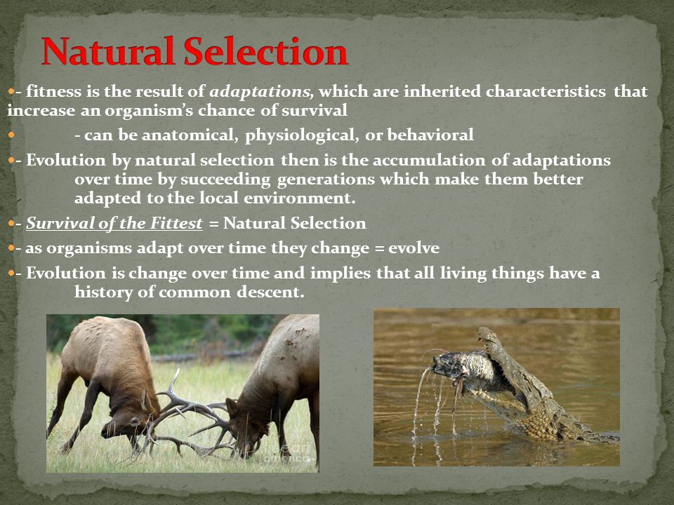 Natural Selection - fitness is the result of adaptations, which are inherited characteristics that increase an organism's chance of survival.