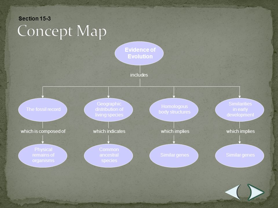 Concept Map Section 15-3 Evidence of Evolution includes