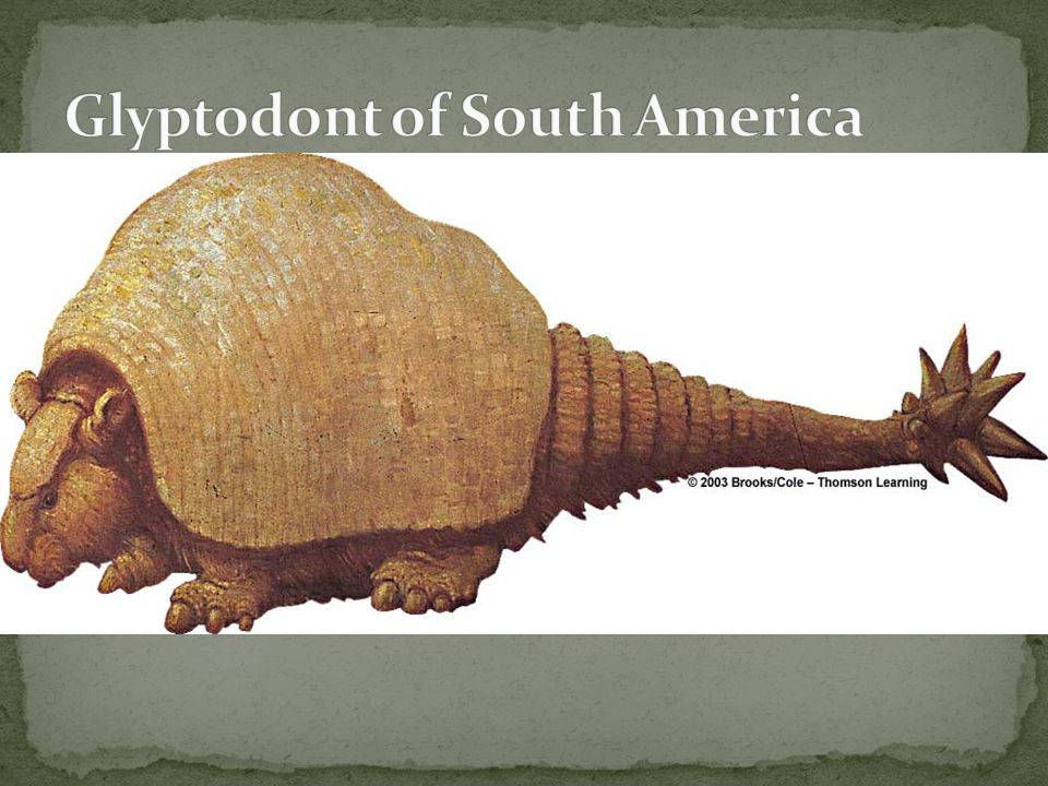 Glyptodont of South America