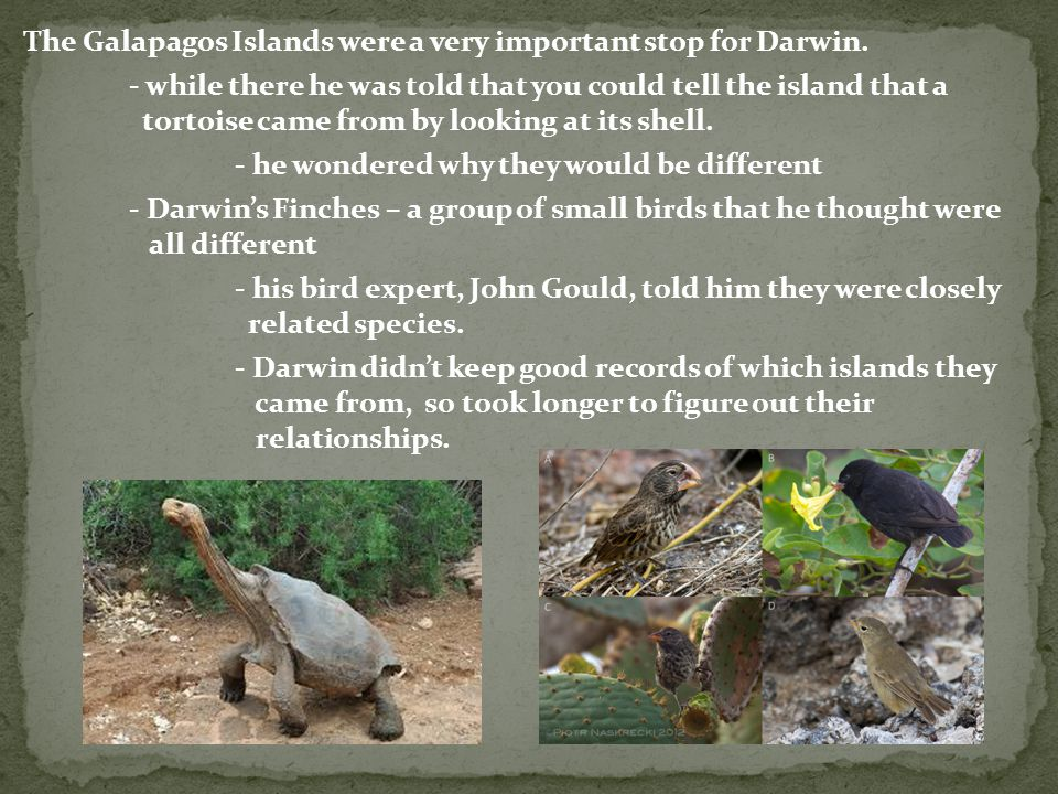 The Galapagos Islands were a very important stop for Darwin.