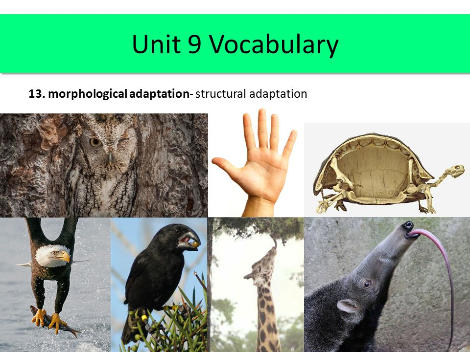 Unit 9 Vocabulary beaks of finches joints in your fingers