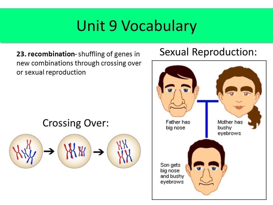 Unit 9 Vocabulary Sexual Reproduction: Crossing Over: