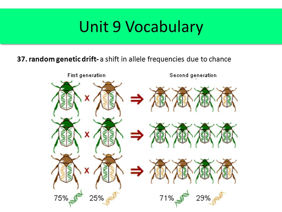 Unit 9 Vocabulary 37. random genetic drift- a shift in allele frequencies due to chance