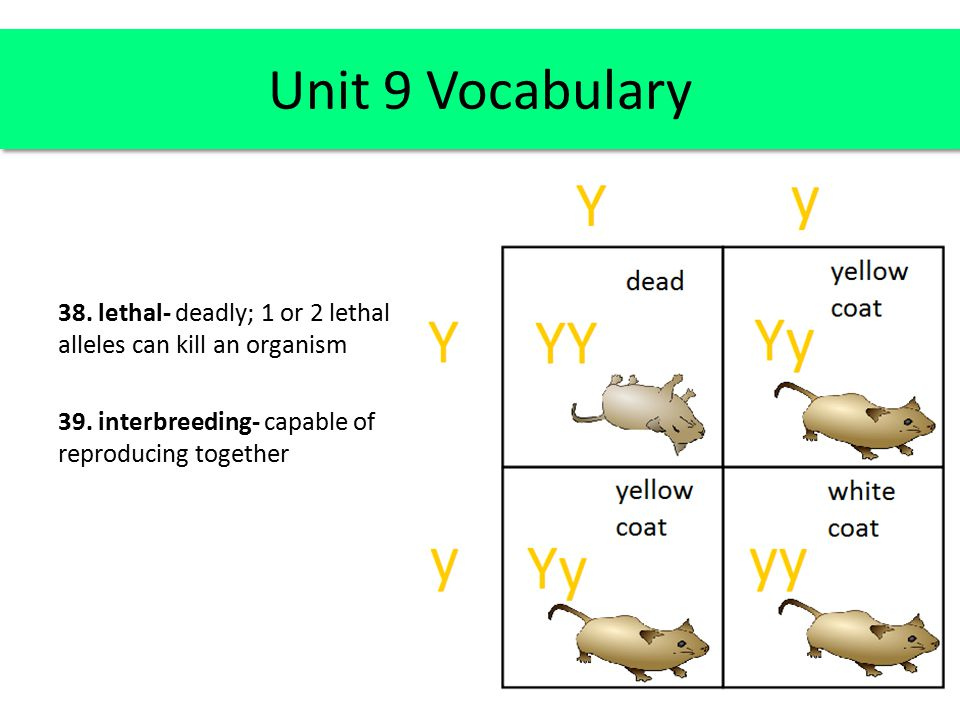 Unit 9 Vocabulary 38. lethal- deadly; 1 or 2 lethal alleles can kill an organism 39.