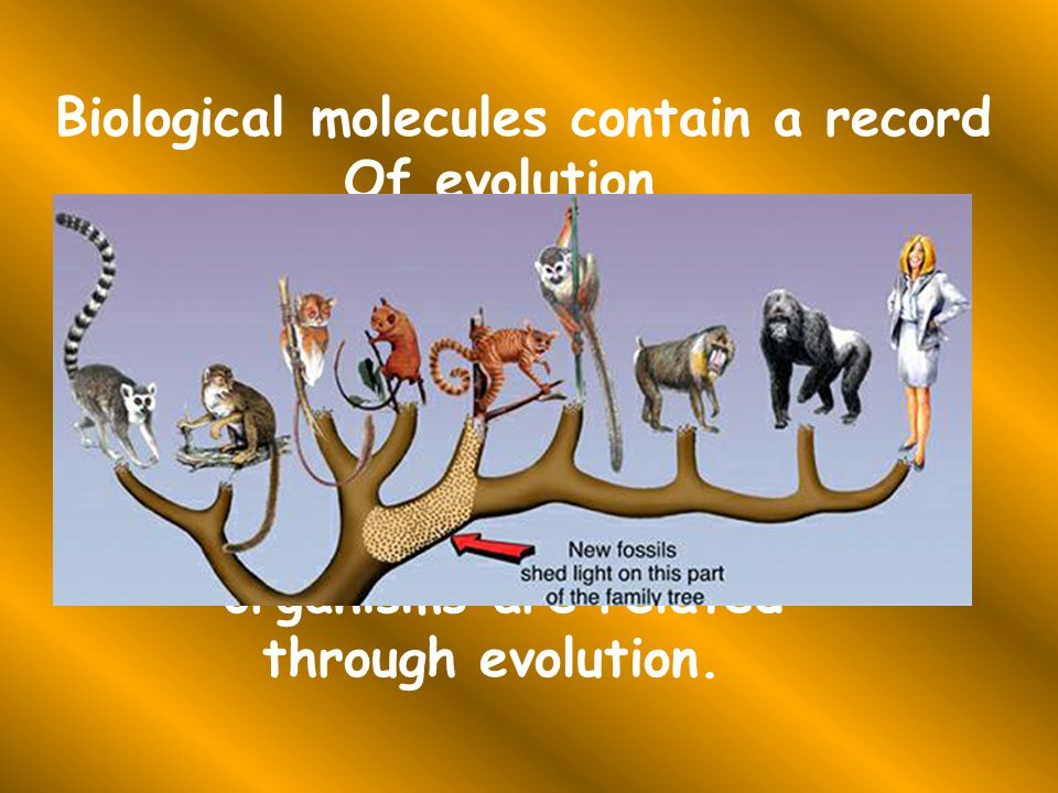 Biological molecules contain a record Of evolution.