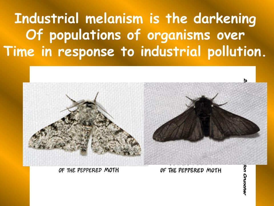 Industrial melanism is the darkening Of populations of organisms over