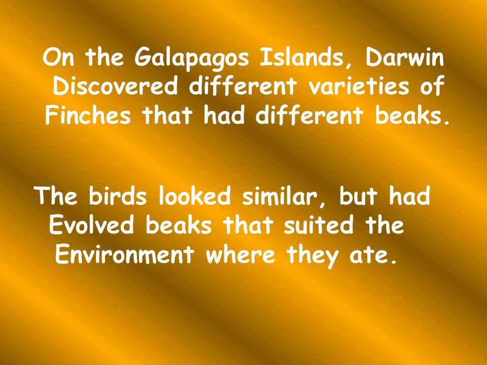 On the Galapagos Islands, Darwin Discovered different varieties of