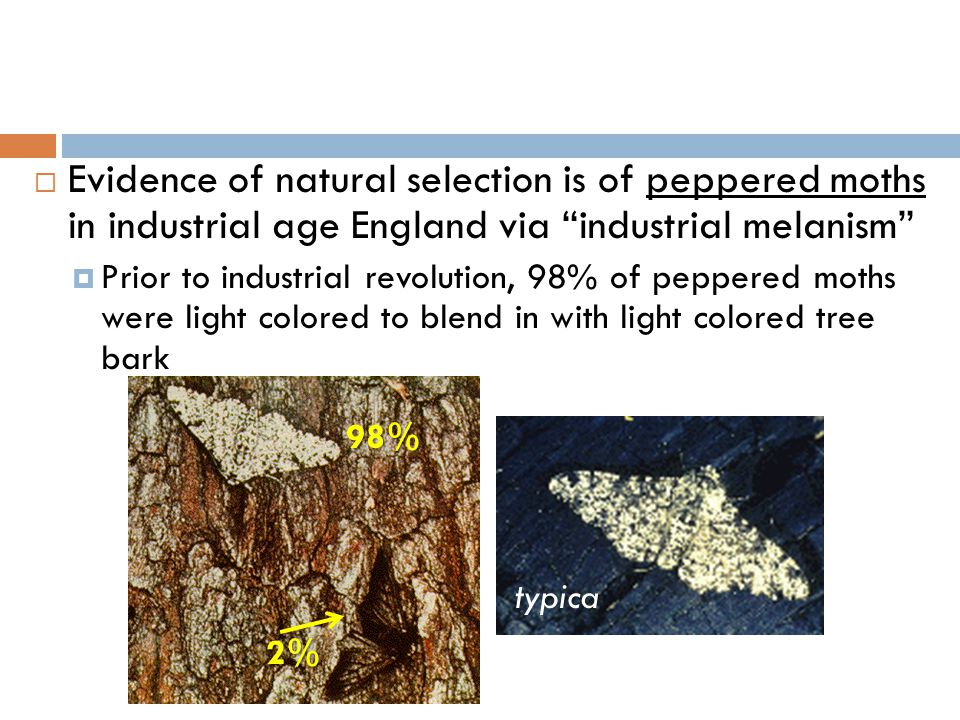 Evidence of natural selection is of peppered moths in industrial age England via industrial melanism