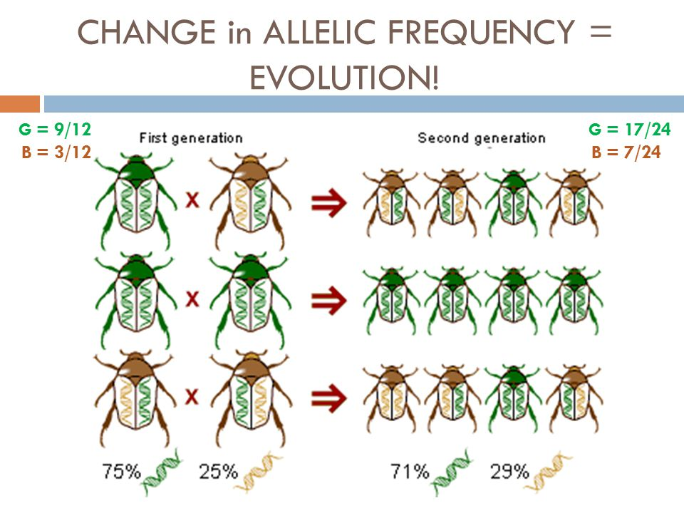 CHANGE in ALLELIC FREQUENCY = EVOLUTION!
