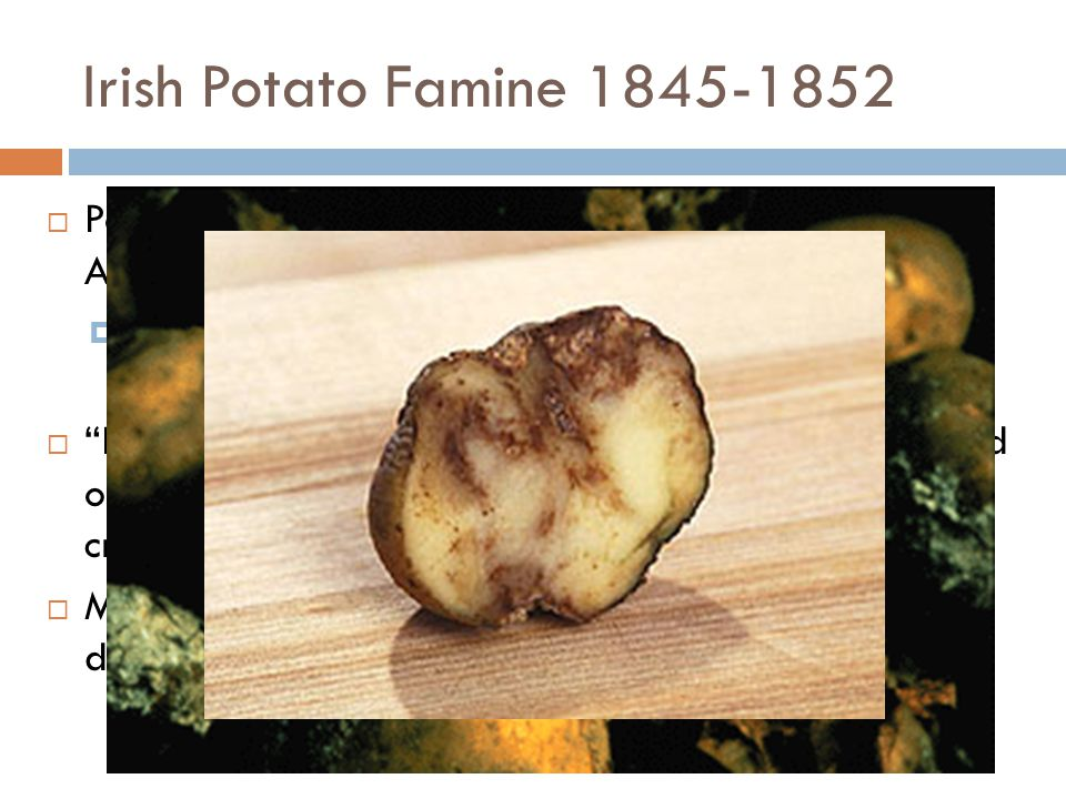 Irish Potato Famine 1845-1852 Potatoes originated from Andes Mountains in S. America – many different varieties of potatoes.